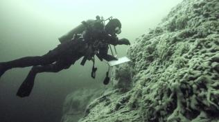 Markus Thompson surveying herring eggs at 90' depth. Spiller Channel, Canada. Photo: T. Blaine.