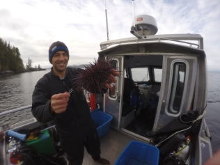Sampling sea urchins on Calvert Island. Photo: Jenn Burt.